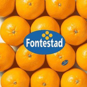 Naranja de mesa Fontestad