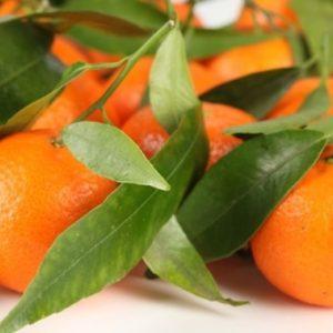 Mandarinas naturales con hoja